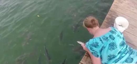女子在河边喂鱼 下一幕让她傻眼究竟发生了什么