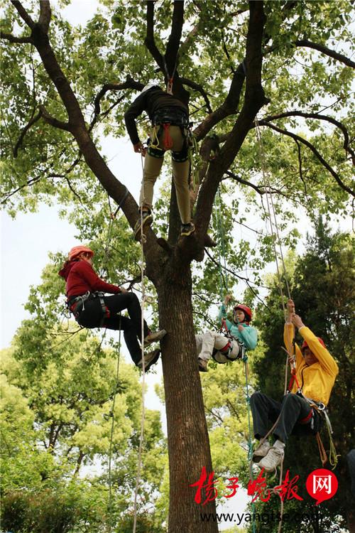 苏州校园设爬树课 现场探访攀树运动教程【图】