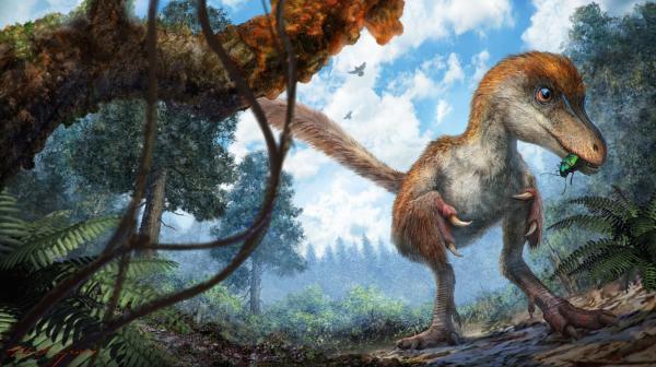 琥珀恐龙的复原图。