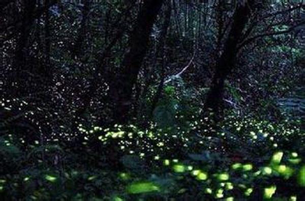 公园购萤火虫放飞环保志愿者:爱它就不要伤害它