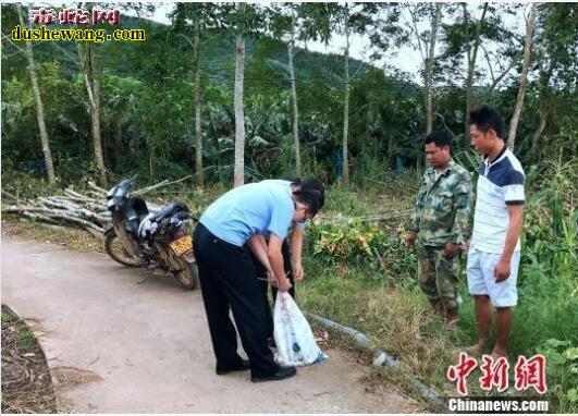 巨蟒偷鸡后躲蕉林避暑被村民擒获